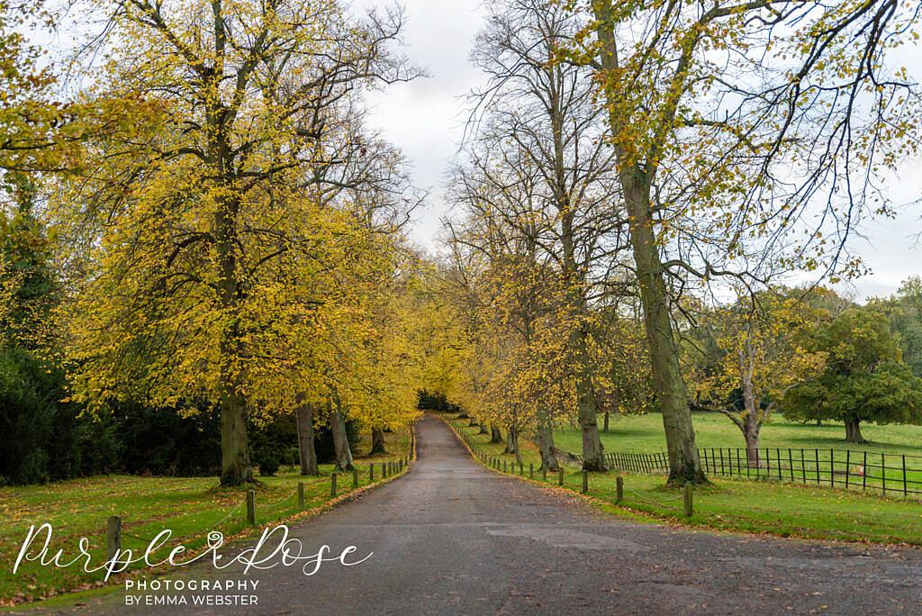 Autumn trees leading to Kelmarsh Hall Northampton