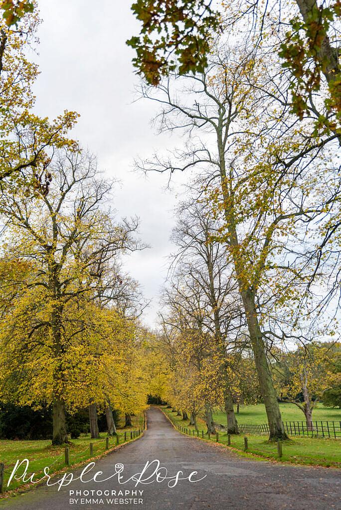 Tree lined driveway to Kelmarsh Hall Northampton