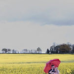Bride and groom standing in a field with a red umbrella