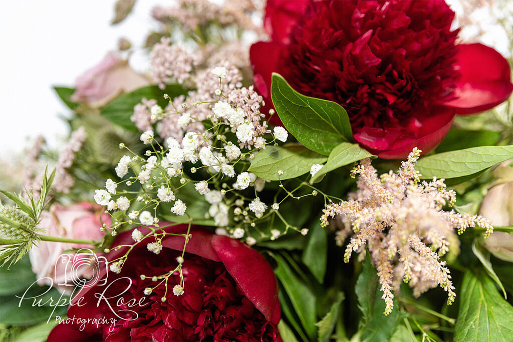 Close up of red and white flowers